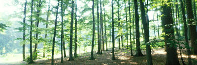 Forest Floor Photograph - Forest Scene With Fog, Odenwald by Panoramic Images