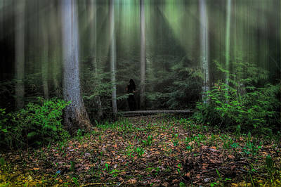 Photograph - Forest Secrets by Gary Smith