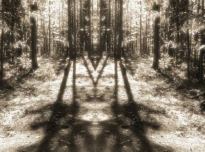Forest Shadows Art Print by Dan Sproul