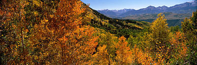 Ouray Photograph - Forest, Silverton, San Juan County by Panoramic Images