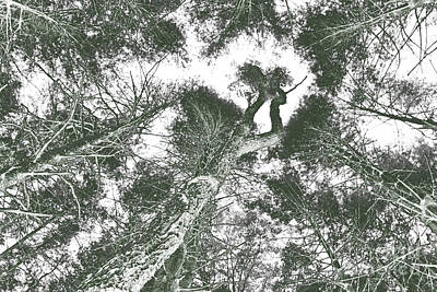 Negative Effect Digital Art - Forest Skyward by Jonathan Welch