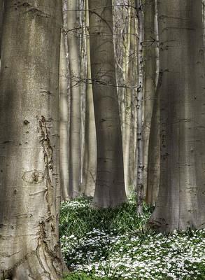 Pasture Woodland Photograph - forest spring flowers Anemone nemorosa by Dirk Ercken