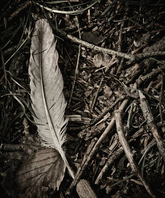 Forest Floor Photograph - Forest Still Life by Odd Jeppesen