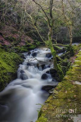 Forest Stream Art Print by Ian Mitchell