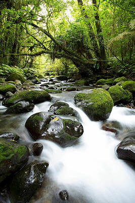 Forest Stream Art Print by Les Cunliffe