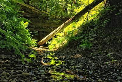 Forest Stream Art Print