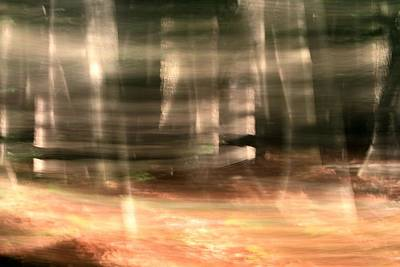 Forest Floor Photograph - Forest Sunrise by Dan Sproul