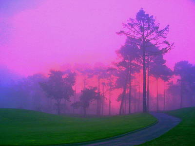 Photograph - Forest Sunrise by Derek Dean