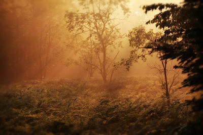 Photograph - Forest Sunrise by Scott Hovind