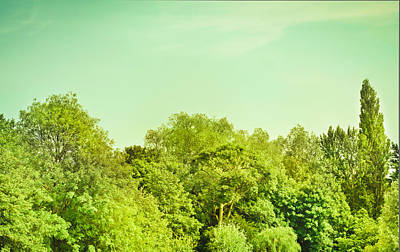 Nature Scene Photograph - Forest by Tom Gowanlock