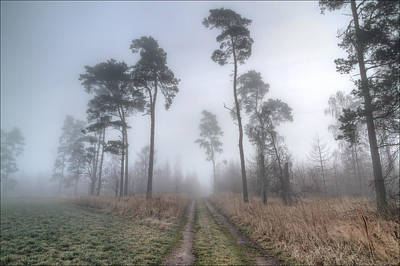 Path Photograph - Forest Track In Mist by EXparte SE