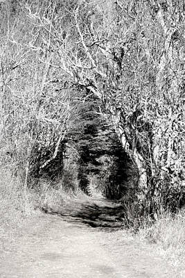 Photograph - Forest Trail - Black And White by Marie Jamieson