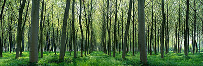 Chateau Photograph - Forest Trail Chateau-thierry France by Panoramic Images