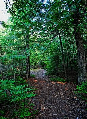 Photograph - Forest Trail by Gary Wonning