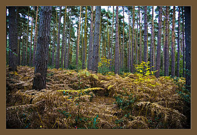 Art Print featuring the photograph Forest Trees by Maj Seda