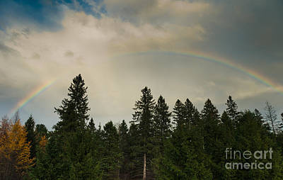 Photograph - Forest Under The Rainbow by Cheryl Baxter
