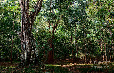 Photograph - Forest View At Siem Reap by Julian Cook
