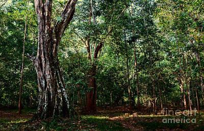 Forest View At Siem Reap Art Print by Julian Cook
