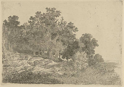 Waterscape Drawing - Forest View, Remigius Adrianus Haanen by Remigius Adrianus Haanen