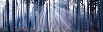Radiant Image Photograph - Forest W Sunrays Landsberg Vicinity by Panoramic Images