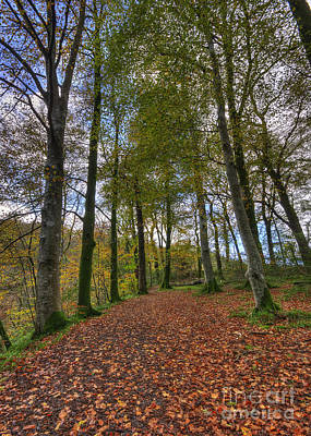 Photograph - Forest Walk by Darren Wilkes