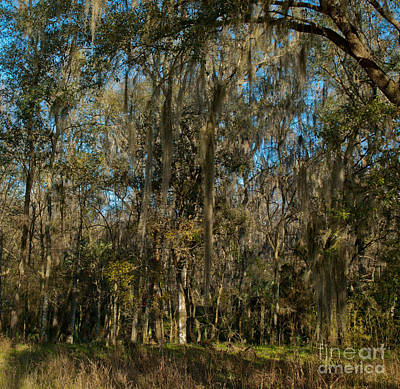 Photograph - Forest Wall by Kathi Shotwell