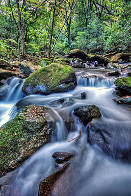Forest Waterfall Art Print by John Swartz
