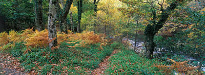 Exmoor Photograph - Forest, Watersmeet, Exmoor, Devon by Panoramic Images