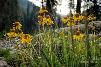 Photograph - Forest Wildflowers by Peggy Hughes