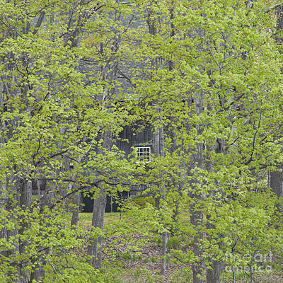 Photograph - Forest Window by Alan L Graham