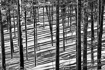Forest's Shadows Art Print