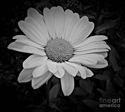 Photograph - Forever Bw by Chalet Roome-Rigdon