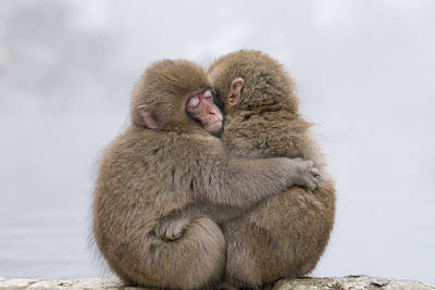 Monkey Wall Art - Photograph - Forever Friends by Takeshi Marumoto