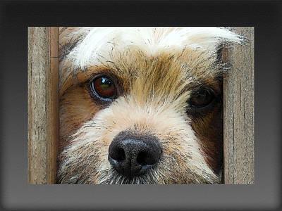 Cute Dog Digital Art - Forever by Robert Orinski