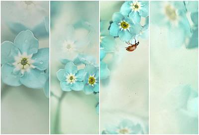 Ladybug Photograph - Forget Me Not..... by Ellen Van Deelen