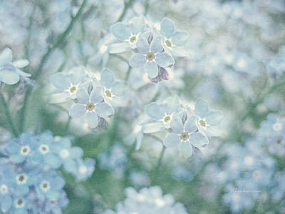 Blue Photograph - Forget Me Not Lest You Be Forgotten by Georgiana Romanovna