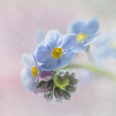 Forget Me Not Square Art Print by Angie Vogel