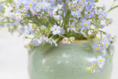 Photograph - Forget-me-nots In A Vase by Peggy Collins