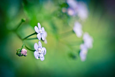 Photograph - Forget Me by Priya Ghose