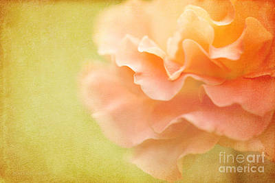 Forgiveness Art Print by Beve Brown-Clark Photography