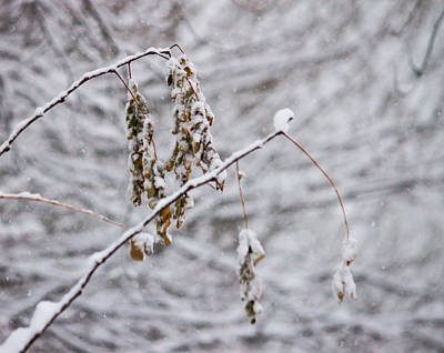 Winter Photograph - Forgotten Leaves by Pauline Brock