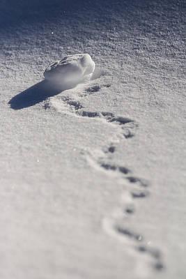 Photograph - Forgotten Snowball by Justin Albrecht