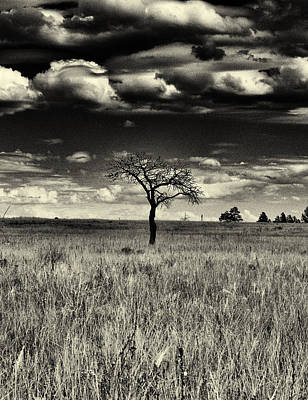 Photograph - Forgotten Tree by Joshua House