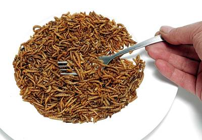 Fork With Plate Of Mealworm Print by Victor De Schwanberg