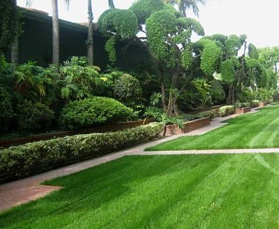 Photograph - Formal Garden At Santa Anita Park by Melissa McCrann