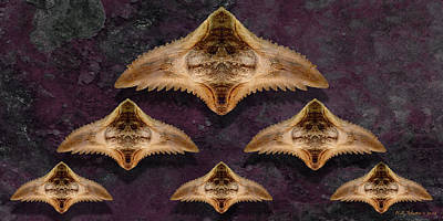 Photograph - Formation 6p by WB Johnston