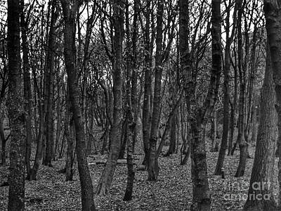 Photograph - Formby Woods In Monochrome by Joan-Violet Stretch