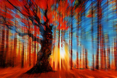 Painting - Forrest And Light Large by Tony Rubino