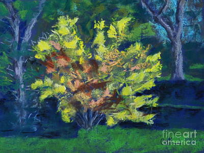 Pastel - Forsythia Bush by Calliope Thomas