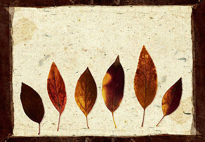 Forsythia Photograph - Forsythia Leaves In Fall by Carol Leigh